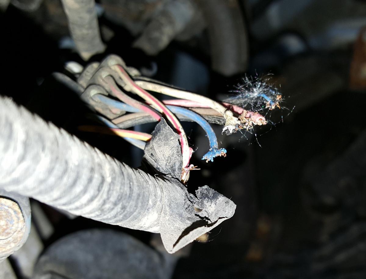 1003 Accord 2008 range switch damage?v=1 0 automotive wiring harness deterioration & rodent damage